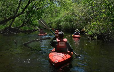 Batsto-river-pine-barrens-kayaking-trees-800px