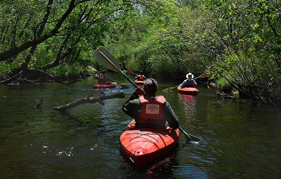 Kayaking and canoeing on the Batsto River in the New Jersey Pine Barrens.