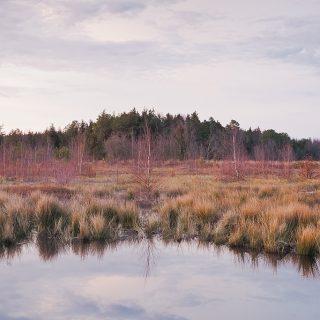 Franklin Parker Preserve New Jersey Pine Barrens Chatsworth