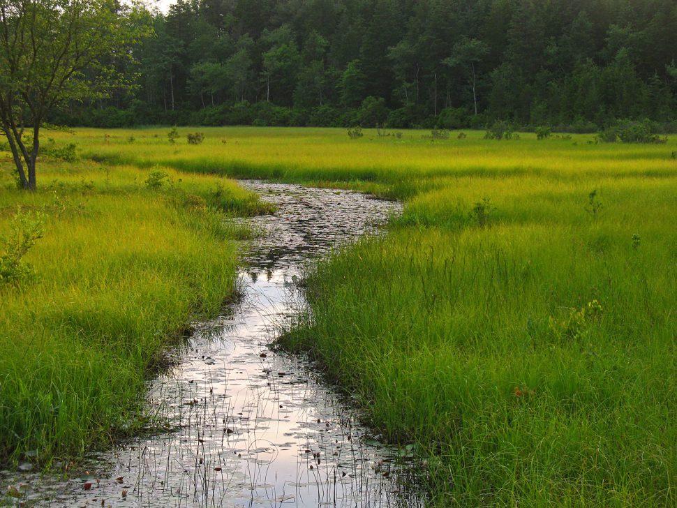 Pine-Barrens-Stream-bog-Christopher-Magarell