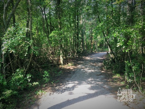 One of the ADA accessible trails at Atsion Lake Recreation Area.