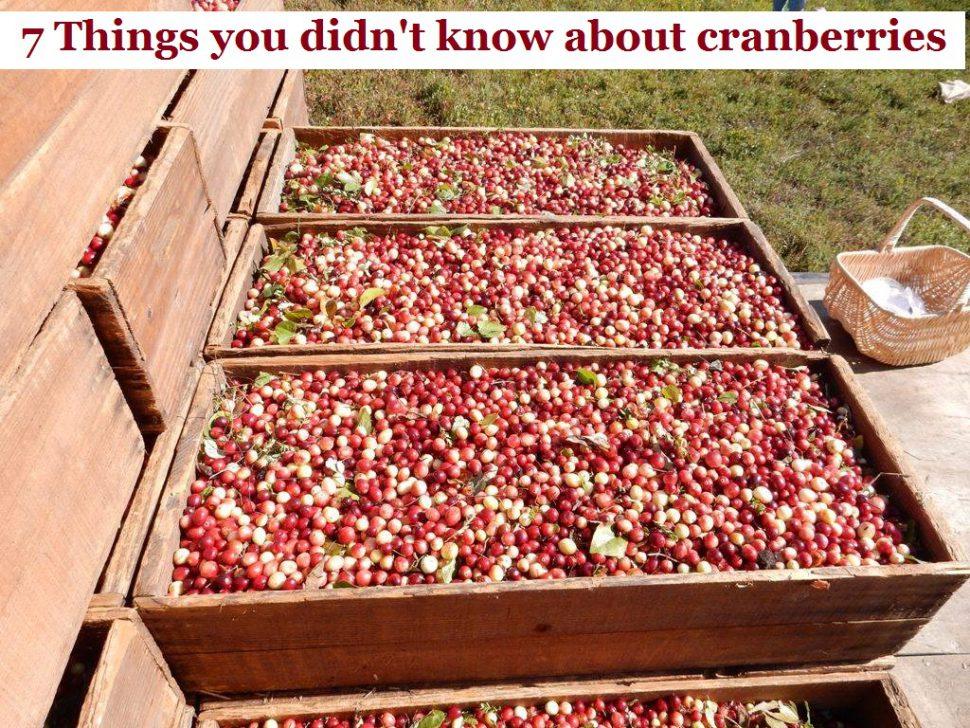 7-things-cranberries