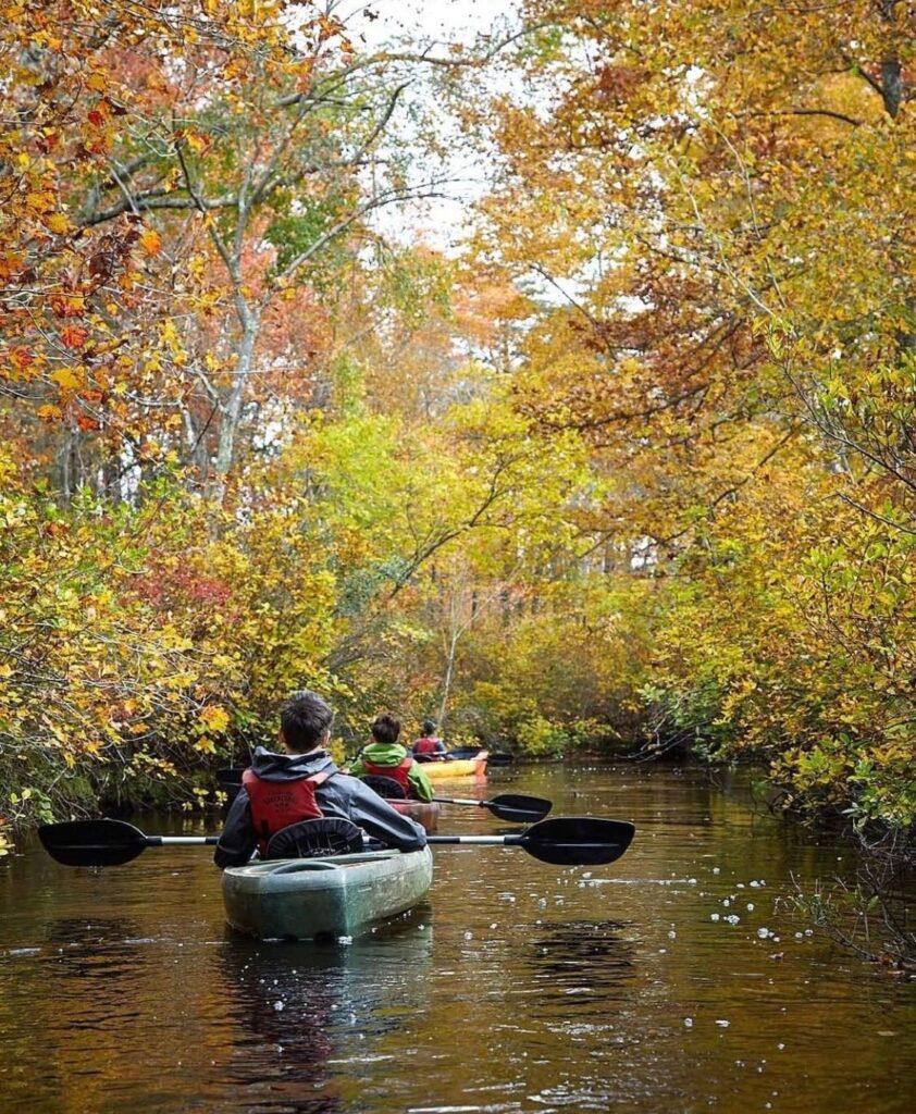 Kayakers paddling through trees