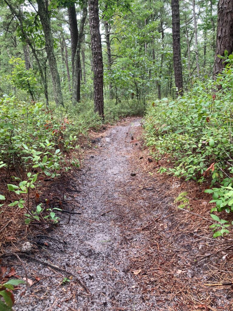 Trail into the woods